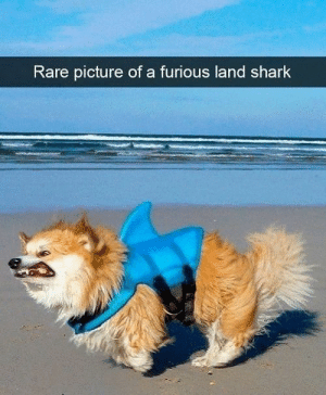 Dog Memes Of The Day 32 Pics – Ep52 #animalmemes #dogmemes #memes #dogs - Lovely Animals World: Rare picture of a furious land shark Dog Memes Of The Day 32 Pics – Ep52 #animalmemes #dogmemes #memes #dogs - Lovely Animals World