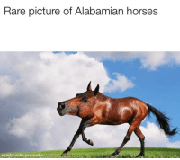 Horses, Alabama, and Dank Memes: Rare picture of Alabamian horses  made with mematic