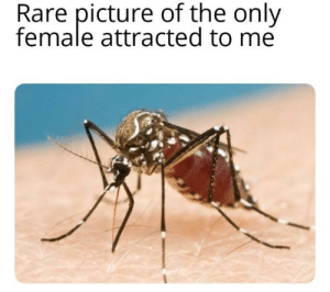MeIRL, Rare, and Picture: Rare picture of the only  female attracted to me meirl