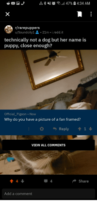 Rarepuppers: /rarepuppers  u/Soundcity1 . 21m . i.reddit  technically not a dog but her name is  puppy, close enough?  Official_Pigeon Now  Why do you have a picture of a fan framed?  Reply 1  VIEW ALL cOMMENTS  4  Share  Add a comment