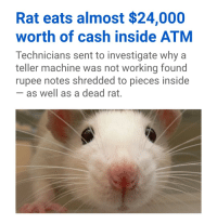 me_irl: Rat eats almost $24,000  worth of cash inside ATM  Technicians sent to investigate why a  teller machine was not working found  rupee notes shredded to pieces inside  as well as a dead rat. me_irl