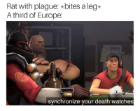 Memes, Death, and Europe: Rat with plague: *bites a leg*  A third of Europe:  synchronize your death watches