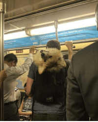 """Cute, Subway, and Tumblr: Rated by your Iene <p><a href=""""http://awwww-cute.tumblr.com/post/163776124977/saying-hey-from-the-nyc-subway-source"""" class=""""tumblr_blog"""">awwww-cute</a>:</p><blockquote><p>Saying hey from the NYC Subway (Source: <a href=""""http://ift.tt/2v3kBbR"""">http://ift.tt/2v3kBbR</a>)</p></blockquote>"""
