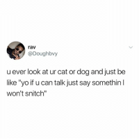"Be Like, Memes, and Snitch: rav  @Doughbvy  u ever look at ur cat or dog and just be  like ""yo if u can talk just say somethin  won't snitch"" ☺️💖"