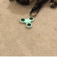 raysipe1:Cat and fidget spinner yeah they do that :v: raysipe1:Cat and fidget spinner yeah they do that :v