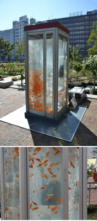 Goldfish, Phone, and Streets: razorshapes:  Kingyobu  Goldfish are a big source of inspiration for the Japanese, but art collectiveKingyobu has taken that inspiration to the next level. The group has installed goldfish tank phone booths on the streets of Osaka, making for quite the interesting sight. The cord of the phone floats about in the water, while dozens of goldfish swim around in the booth. The installations are visually intriguing, although there's noapparent reason as to why they are there in the first place. [via]