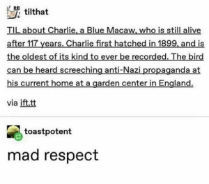 me_irl: RE  TMtilthat  TIL about Charlie, a Blue Macaw, who is still alive  after 117 years. Charlie first hatched in 1899, and is  the oldest of its kind to ever be recorded. The bird  can be heard screeching anti-Nazi propaganda at  his current home at a garden center in England.  via ift.tt  toastpotent  mad respect me_irl