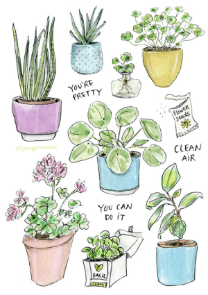 mangomini:   My home is slowly turning into that of a crazy plant lady and I like it! This one I made for Plant Appreciation Day.: re  You'RE  PRETTY  flowER  Seeds  Mangomini  CCEAN  AIR  YoU CAN  02  8ASiL mangomini:   My home is slowly turning into that of a crazy plant lady and I like it! This one I made for Plant Appreciation Day.