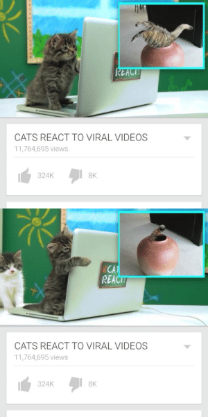 oahkenshit:THIS IS THE WEB CONTENT I AM LOOKING FOR: REACI  CATS REACT TO VIRAL VIDEOS  11,764,695 views  324K  8K   CA  REACT  CATS REACT TO VIRAL VIDEOS  11,764,695 views  324K  8K oahkenshit:THIS IS THE WEB CONTENT I AM LOOKING FOR