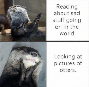 https://t.co/P5XljOWnli: Reading  about sad  stuff going  on in the  world  Looking at  pictures of  otters. https://t.co/P5XljOWnli