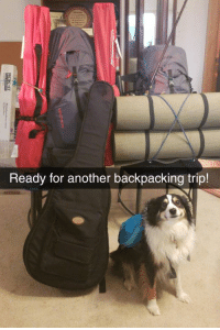 Cute, Funny, and Memes: Ready for another backpacking trip! 42 Cute Animal Memes That Never Stop Being Funny