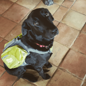 Ready to go to work!! Sasha loves her new job of carrying everything on our walks ❤: Ready to go to work!! Sasha loves her new job of carrying everything on our walks ❤