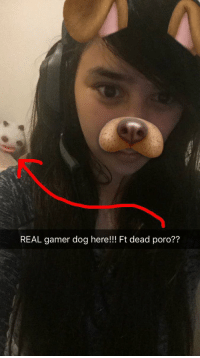 Memes, 🤖, and Hey Guys: REAL amer dog here  Ft dead poro?? Hey guys, real gamer grill here.