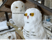 Real, Syndrome, and Imposter: Real programmers Two Years of Imposter Syndrome