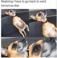 Memes, 🤖, and Working: Realizing I have to go back to work  tomorrow like: