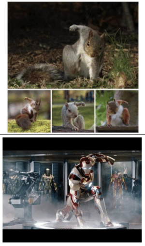 Realizing that squirrels usually land like Iron Man.: Realizing that squirrels usually land like Iron Man.