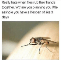Af, Funny, and Lol: Really hate when flies rub their hands  together. Wtf are you planning you little  asshole you have a lifespan of like 3  days Foreels scary af lol