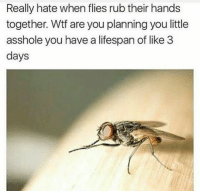 Wtf, Asshole, and You: Really hate when flies rub their hands  together. Wtf are you planning you little  asshole you have a lifespan of like 3  days What are these bastards planning