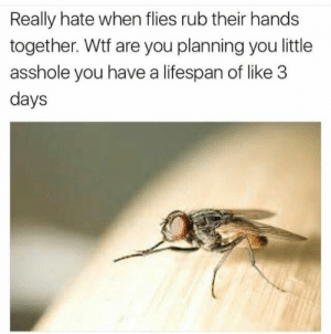 Wtf, Good, and Sly: Really hate when flies rub their hands  together. Wtf are you planning you little  asshole you have a lifespan of like 3  days Sly fly up to no good.