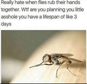 I see this happening now: Really hate when flies rub their hands  together. Wtf are you planning you little  asshole you have a lifespan of like 3  days I see this happening now