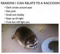 Cute, Fresh, and Funny: REASONS I CAN RELATE TO A RACCOON  . Dark circles around eyes  Eats junk  Small and chubby  Stays up all night  Cute but will fight you fine 40+ Memes That Are Just Fresh and Funny