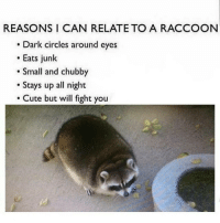 Memes, Raccoon, and Circles: REASONS I CAN RELATE TO A RACCOON  Dark circles around eyes  Eats junk  Small and chubby  Stays up all night  Cute but will fight you Awe racoon Ha ha. I'm weak flatlined dead pettypost nochill teamnoharmdone noharmdone