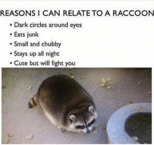 If you love trash pandas as much as we do then you've come to the right place! #Animals #Memes #Cute #Raccoons #TrashPandas: REASONS I CAN RELATE TO A RACCOON  Dark circles around eyes  Eats junk  Small and chubby  Stays up all night  Cute but will fight you If you love trash pandas as much as we do then you've come to the right place! #Animals #Memes #Cute #Raccoons #TrashPandas