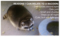 College, Cute, and Dank: REASONS I CAN RELATE TO A RACOON:  Dark circles around eyes  Eats junk  Small and chubby  Stays up all night  Cute, but will fight you Reminds me of my college years.