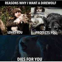 gameofthrones got asoiaf hbo thronesmemes direwolf: REASONS WHY I WANTA DIREWOLF  LOVES YOU  PROTECTS YOU  DIES FOR YOU gameofthrones got asoiaf hbo thronesmemes direwolf