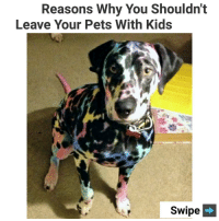 Memes, Pets, and Kids: Reasons Why You Shouldnt  Leave Your Pets With Kids  Swipe Swipe to see other pics 😂 (@doggocatcat) | follow @fuckersbelike for more