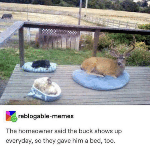 wholesome small buck (i'm crying 🥺🥺🥺): reblogable-memes  The homeowner said the buck shows up  everyday, so they gave him a bed, too. wholesome small buck (i'm crying 🥺🥺🥺)