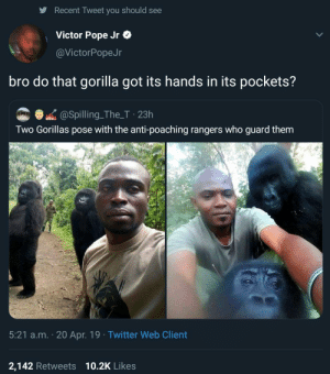 Dank, Memes, and Pope Francis: Recent Tweet you should see  Victor Pope Jr &  @VictorPopeJr  bro do that gorilla got its hands in its pockets?  @Spilling_The_T 23h  Two Gorillas pose with the anti-poaching rangers who guard them  5:21 a.m. 20 Apr. 19 Twitter Web Client  2,142 Retweets  10.2K Likes Posted up. by Rolloverbeethoven93 MORE MEMES