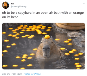 "Recently, a new meme format using the phrase, ""oh to be"" has been making the rounds on Twitter. Now, it has arrived at the animal kingdom as well and we're here to bring you all the best ones we have seen. #funnyanimals #animalmemes #funnyanimalphotos #ohtobememes #cuteanimals: Recently, a new meme format using the phrase, ""oh to be"" has been making the rounds on Twitter. Now, it has arrived at the animal kingdom as well and we're here to bring you all the best ones we have seen. #funnyanimals #animalmemes #funnyanimalphotos #ohtobememes #cuteanimals"
