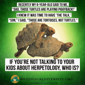 "Dad, Dank, and Memes: RECENTLY MY 6-YEAR-OLD SAID TO ME,  ""DAD, THOSE TURTLES ARE PLAYING PIGGYBACK!""  I KNEW IT WAS TIME TO HAVE 'THE TALK.  ""SON,"" I SAID, ""THOSE ARE TORTOISES, NOT TURTLES.""  רי  IF YOU'RE NOT TALKING TO YOUR  KIDS ABOUT HERPETOLOGY, WHO IS?  BIOLOGICALD IVERSITY. ORG  Tortoise photo by Ltshears, CC-BY-SA Not Turtles! by NaturalDonut FOLLOW HERE 4 MORE MEMES."