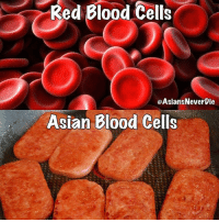 Asian, Life, and Memes: Red Blood Cells  OAsiansNeverbie  Asian Blood Cells When Spam is life though 😂😂😂 all you need is some rice and an egg and you set 😂😂🔥🔥