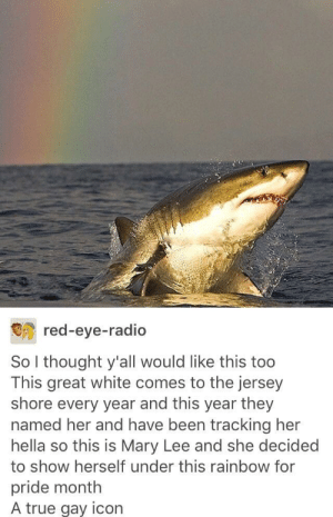 Happy Pride Month from Mary Lee: red-eye-radio  So I thought y'all would like this too  This great white comes to the jersey  shore every year and this year they  named her and have been tracking her  hella so this is Mary Lee and she decided  to show herself under this rainbow for  pride month  A true gay icon Happy Pride Month from Mary Lee