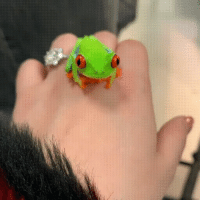 Tree, Red, and Frog: Red eyed tree frog