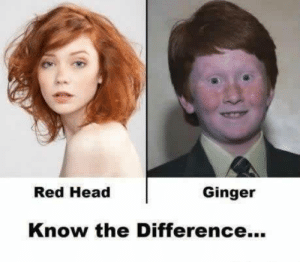 Some people on 9gag need to see this: Red Head  Ginger  Know the Difference. Some people on 9gag need to see this