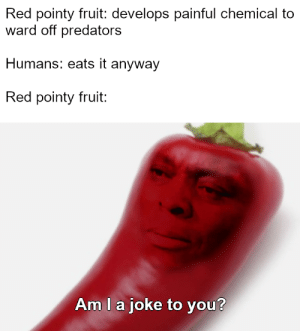 How do people even enjoy such a miserable feeling?: Red pointy fruit: develops painful chemical to  ward off predators  Humans: eats it anyway  Red pointy fruit:  Am l a joke to you? How do people even enjoy such a miserable feeling?