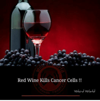 Memes, 🤖, and Cell: Red Wine Kills Cancer Cells  Weird World