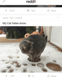 Where the memes come from: reddit  34.6k  1464  r aww 13h i. redd it  My Cat hates snow.  A 7776  73  Share  Share Where the memes come from