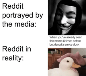 Nice duck tho by stalin-stalin MORE MEMES: Reddit  portrayed by  the media:  When you've already seen  this meme 6 times before  but dang it's a nice duck  Reddit in  reality: Nice duck tho by stalin-stalin MORE MEMES