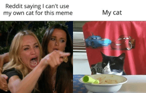 My cat about to become a memelord: Reddit saying I can't use  my own cat for this meme  Му cat  52 My cat about to become a memelord