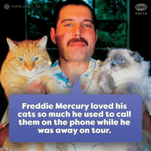 Cats, Facts, and Memes: Reddit u/u/JF 112  OMG  FACTS  Freddie Mercury loved his  cats so much he used to call  them on the phone while he  was away on tour. ❤️❤️❤️ (Teemu)
