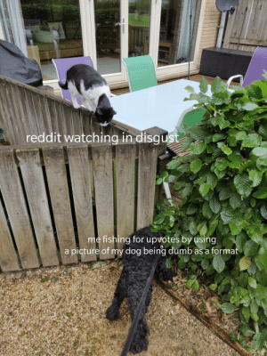 I'm sorry: reddit watching in disgust  me fishing forupvotes by using  a picture of my dog being dumb as a format I'm sorry