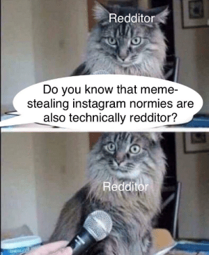 When Someone Says That Instagram Is Better Then Reddit No