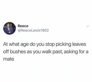 Me irl: Reece  @ReeceLewis1902  At what age do you stop picking leaves  off bushes as you walk past, asking for a  mate Me irl