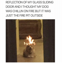 I really hope he realized his pooch wasn't on fire prior to taking the pic lol: REFLECTION OF MY GLASS SLIDING  DOOR AND I THOUGHT MY DOG  WAS CHILLIN ON FIRE BUT IT WAS  JUST THE FIRE PIT OUTSIDE I really hope he realized his pooch wasn't on fire prior to taking the pic lol
