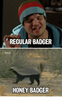 "Bad, Breaking Bad, and Target: REGULAR BADGER   D WILD  HONEY BADGER <p><a href=""http://youtu.be/g3btFCpCK8w"" target=""_blank"">Have you always wanted to hear Badger from &ldquo;Breaking Bad&rdquo; narrate the honey badger video? You got it. </a></p>"
