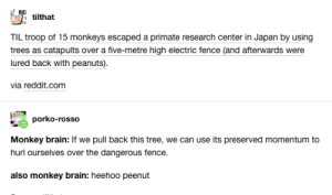 Yes: REI  tilthat  TIL troop of 15 monkeys escaped a primate research center in Japan by using  trees as catapults over a five-metre high electric fence (and afterwards were  lured back with peanuts).  via reddit.com  porko-rosso  Monkey brain: If we pull back this tree, we can use its preserved momentum to  hurl ourselves over the dangerous fence.  also monkey brain: heehoo peenut Yes